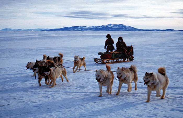 The New Zealand sled dog team out for a run from Scott Base.